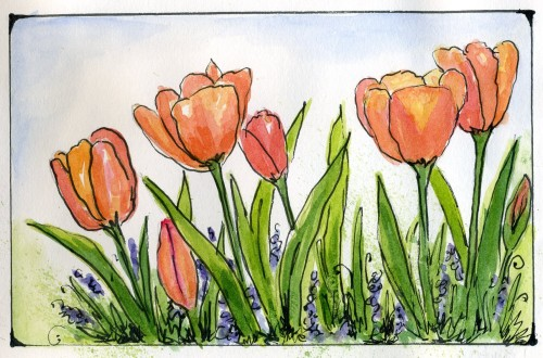 Watercolor Flower Art:Tulips from the Thanksgiving Point Tulip Festival in my watercolor flower journal-myflowerjournal,.com