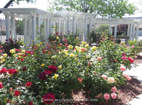 St George Mormon Temple Flowers