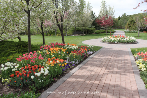 Visit the Thanksgiving Point Tulip Festival,Lehi, Utah-My Flower Journal.com