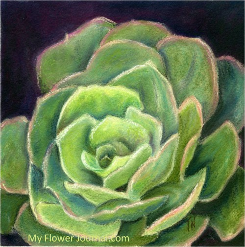 Flower Art: Succulent Original Painting-My Flower Journal.com