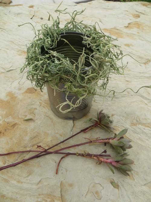 Beginning steps for succulent and garden flower bouquet-myflowerjournal.com
