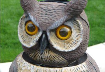 Lulu The Garden Owl