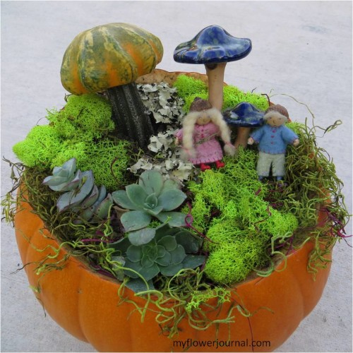 Make a Wee Folk Pumpkin Garden with a small squash, moss and succulents-myflowerjournal