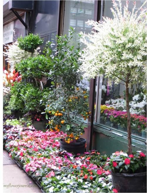 NYC 28th street flower market-myflowerjournal
