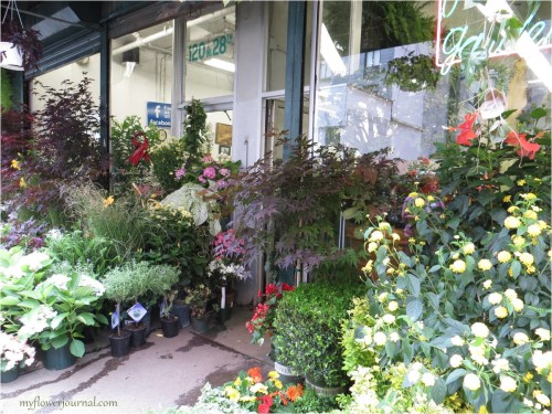 NYC Flower Market on 28th street-myflowerjournal
