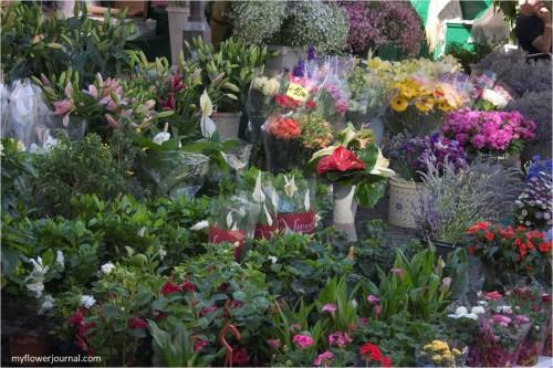 Flower Markets Near and Far-Rome, Italy Flower Market-myflowerjournal