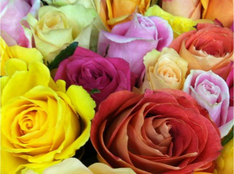 Roses at Costco-myflowerjournal