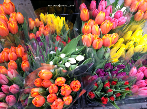 Tulips at Costco-myflowerjournal.com