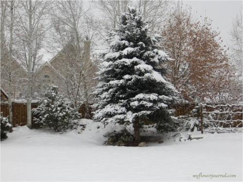 Utah winter wonderland in our backyard-myflowerjournal
