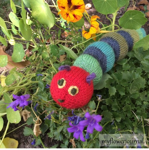 Free Crochet Pattern Very Hungry Caterpillar : A Hungry Caterpillar In My Garden - My Flower Journal
