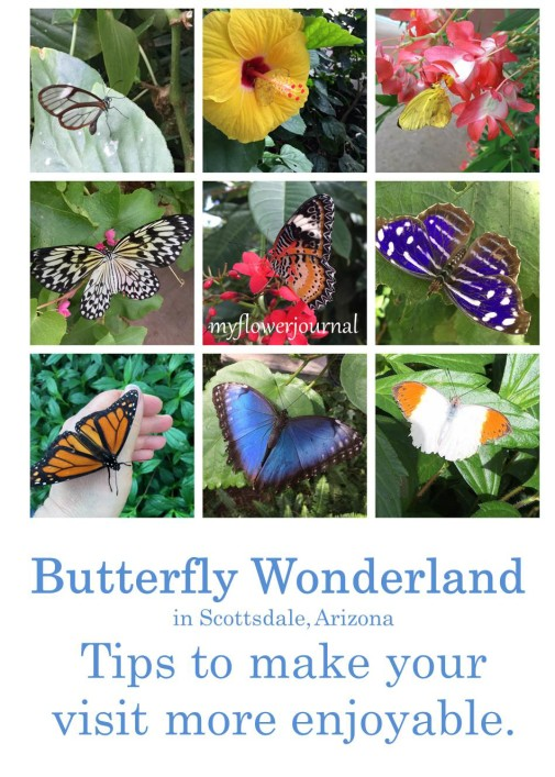 Tips to make your visit to Butterfly Wonderland in Scottsdale, Az more enjoyable-myflowerjournal