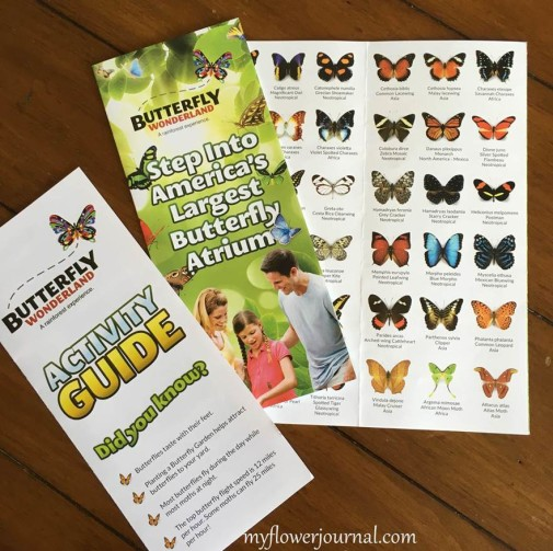 Tips to make your visit to Butterfly Wonderland in Scottsdale, Az more fun-myflowerjournal
